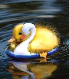 lazy duckling so adorable!