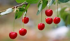 10 Fruits and Vegetables That Grow Fast