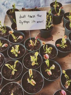 """elphabaforpresidentofgallifrey: alittlelostsputnik: hollowedskin: dr-archeville: ayellowbirds: andymisandry: ayellowbirds: pixiebutterandjelly: Poison Ivy as a kindergarten teacher no, but really: flytraps use up a LOT of energy closing their traps. You know a lot of other plants that move that much? Tricking them into closing when there isn't food there is indeed mean. B-but… they're plants… they're devoid of sentience, right? They don't """"feel,"""" they're more like little wind-up ma..."""