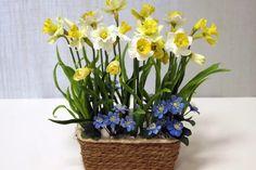 «Купила нарциссы в пиале с водой. Что делать с ними после цветения? Насколько они жизнеспособны?» Яна...