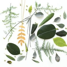 Shlomit Ofir presents her new Rainforest jewelry collection inspired by leaves, plants, tribes adn animals and incorporating lots of green shades.