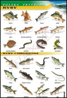 Ryby - polska przyroda - plansza