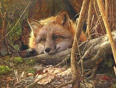 """Stunning Wildlife Paintings by Denis Mayer Jr.      Vancouver, Canada.                                 """"A Touch Of Warm""""."""