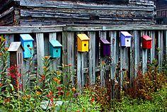 birdhouses on a fence