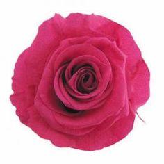 FL0100-58 Standard Rose / Fuchsia Pink