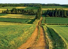 Prince Edward Island- I think we actually travelled this road!  Aaah, the peace. I would love to go back.