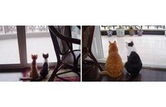 31 Super-cute Cats Who Recreated Their Kittenhood Photos (Slide #88) - Pawsome