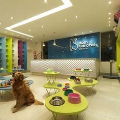Dog Spa, Dog Salon, Pet Clinic, Clinic Design, Pet Boutique, Dog Daycare, Pet Grooming, Pup, Design Inspiration
