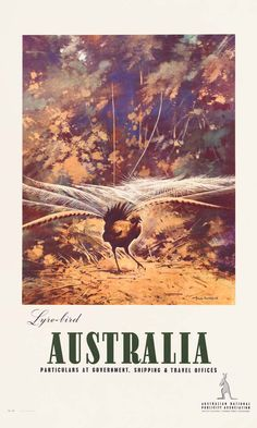 Vintage Poster Love - Lyrebird by James Northfield - http://www.australianvintageposters.com.au/shop/lyrebird-by-james-northfield/