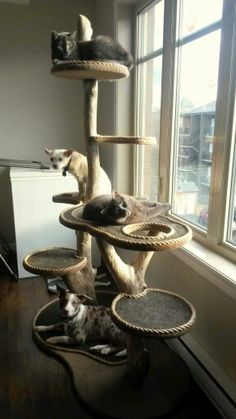 A cat and dog tree