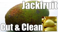 How to Choose and Cut Jackfruit? Jackfruits are one of the tastiest tropical fruits in the world. Cutting it needs little experience, which I have explained in detail here. How To Cut Jackfruit, Carbs In Fruit, Jackfruit Recipes, Easy Indian Recipes, Helpful Hints, Handy Tips, Indian Dishes, Fish Dishes, Recipe Today