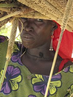 woman farmer harvesting grains and carrying them on her head ~ Niger, September 2010