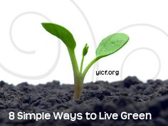 8 simple ways to live green