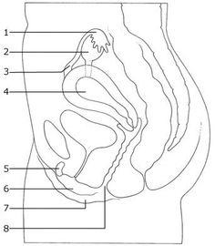 secundaire gelachtskenmerken - Google zoeken Anatomy, Homeschool, Google, Biology, Homeschooling, Artistic Anatomy