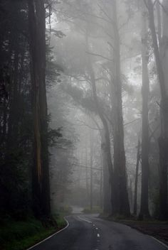 chill playlist <3 Autumn Aesthetic, Night Aesthetic, Nature Aesthetic, City Aesthetic, Night Forest, Foggy Forest, Dark Forest, Calming Pictures, Cool Pictures