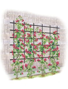 Stately garden arch is a standout in the landscape. Elegant design showcases climbing roses and vines. Extra-sturdy to support large plants.