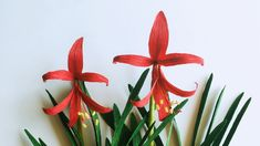 ABC TV | How To Make Aztec Lily From Crepe Paper - Craft Tutorial
