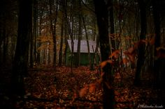 Small hut - There was a small hut before you strayed.  Fallen leaves of the carpet is beautiful. Autumn deepening in quiet.