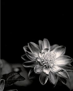 stunning black & white