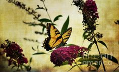 ONE SUMMER DAY  2 PRINTS AND FRAMED ART FOR SALE JUDY WOLINKSKY