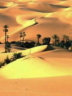 Desert in Sindh, Pakistan