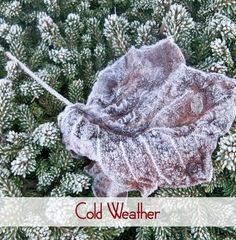 It's early in the year for cold weather, but it's a perfect time to start protecting your plants for the coming winter. Here are a few things you can do to protect your garden in winter weather: http://portlandnursery.com/newsletter/current_news.html