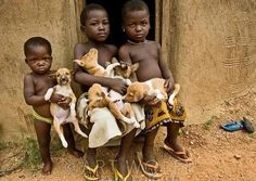Basenji puppies in an African village.