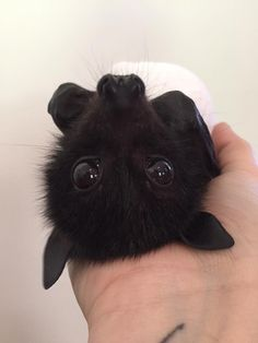 Cutest baby animals videos compilation which includes super cute little babies clips that will force you to say AWW! Cute Little Animals, Cute Funny Animals, Funny Cute, Cute Bat, Cute Baby Bats, Tier Fotos, Cute Creatures, Animals Beautiful, Mammals