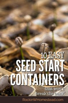 10 Easy Seed Starting Containers that Won't Break the Bank 10 Get a good start on your seeds with these easy seed starting containers that won't break the bank. Growing Tomatoes In Containers, Growing Vegetables, Organic Gardening, Gardening Tips, Vegetable Gardening, Sustainable Gardening, Urban Gardening, Indoor Gardening, Small Candle Holders