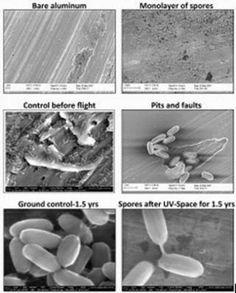 G.A.B.I.E.: La NASA busca a los organismos terrestres que podr...