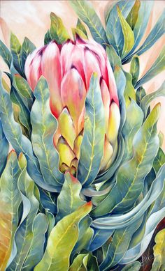Protea, Western Cape, South Africa 'Unfurled' Oil on canvas x Protea Laurifolia The second of a set of three Cape Protea Art, Protea Flower, Watercolor Flowers, Watercolor Paintings, Watercolour, Botanical Wall Art, Fruit Art, Arte Floral, Gouache