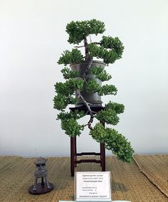 Chinese Garden Juniper Bonsai at the Minnesota Bonsai Society 2016 Mother's Day Show.