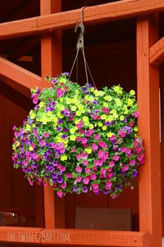 1000 images about flower garden on pinterest low for Low maintenance indoor hanging plants