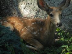 Bambi, hanging out at the Crystalline Temple.  This is some of our wildlife!