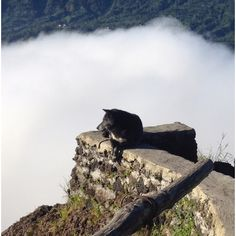 Mt. Batur, puppy dreaming in the clouds