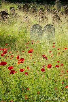 IN FLANDERS FIELDS - by John McCrae, May 1915 In Flanders fields the poppies blow Between the crosses, row on row, That mark our place; and in the sky The larks, still bravely singing, fly Scarce heard amid the guns below.  We are the Dead. Short days ago We lived, felt dawn, saw sunset glow, Loved and were loved, and now we lie In Flanders fields.  Take up our quarrel with the foe: To you from failing hands we throw The torch; be yours to hold it high. If ye break faith with us who die We…