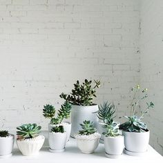 Minimalist plant arrangements always look amazing!