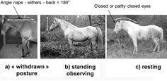Depressive state in horses may open window on human condition, suggest researchers.