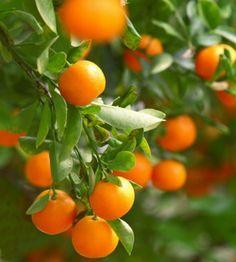 Orange #fruit