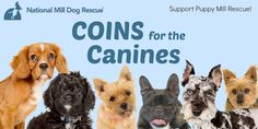 "You can make a difference for puppy mill dogs by participating in our ongoing campaign, ""Coins for the Canines"". Pennies add up and there's power in numbers! Please visit our website for more information: http://milldogrescue.org/coins-canines/"