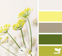 Flora color (boys room)