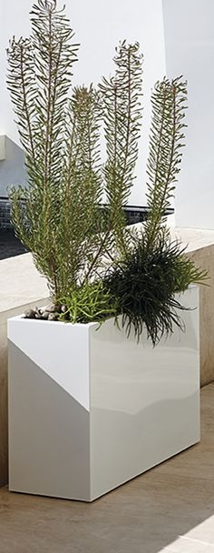 The architectural world meets the natural world. Our Quentin Planter's clean angles and pure lines define this stainless steel planter. | Porta Forma