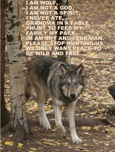 Animals kill to survive, they do not hunt for sport or trophy ... if men keep killing the wolves food source and keep taking the land...what will the wolf do? Do they go extinct because of man's greed & false pride?