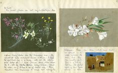 Lilias Trotter: Missionary, Artist — The Conservation Center