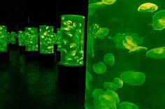 𝚐 𝚒 rainbow aesthetic, aesthetic colors, dark green aesthetic, slytherin aesthe Dark Green Aesthetic, Rainbow Aesthetic, Aesthetic Colors, Blue And Green, Neon Green, Orange Pastel, Soylent Green, Pink Lila, Slytherin Aesthetic