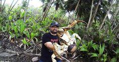 Cua dừa khổng lồ to gần bằng người có thể trèo lên cây và là kẻ trộm trong rừng