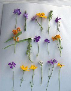 pressing flowers by Ike06~, via Flickr