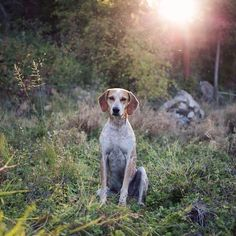 Theron Humphrey / Maddie the Coonhound
