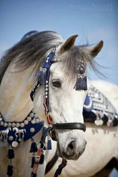 Love the tack and how it contrasts with the horse's colouring