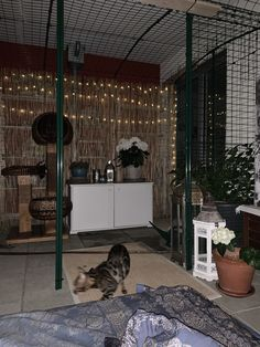 Omlet Katzengehege Outdoor Cat Enclosure, Outdoor Cats, Decor, Decoration, Decorating, Deco
